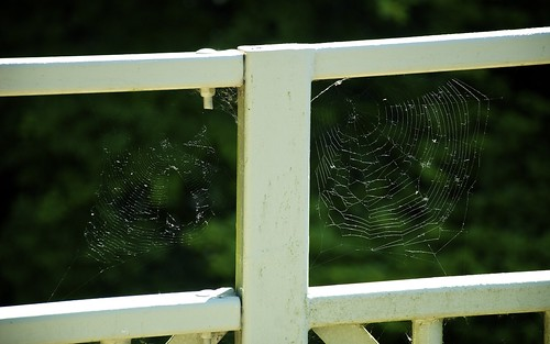 Spider's Web In The Railings