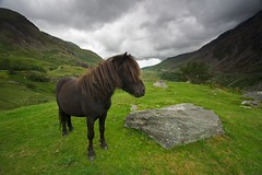 Bert - The Wild Welsh Pony (Lifecapture) Tags: park wild wales canon pony national 5d welsh reverse snowdonia grad gitzo q3 colorcombo markins 1541t
