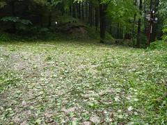 Nach dem Hagelsturm Spinne (Aah-Yeah) Tags: storm stone bayern spinne wald hagel sturm achental katzenberg hails chiemgau piesenhausen marqaurtstein