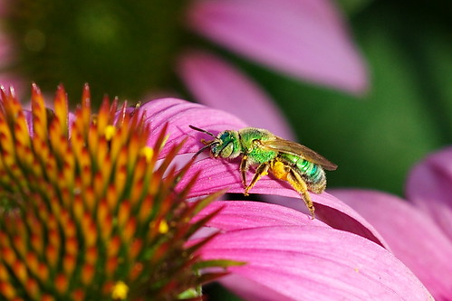 Green-bee (2D)