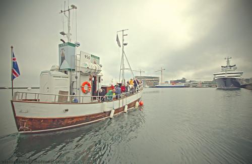 "iceland yacht ""octopus"""