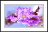 Duelo al Sol (Jose Luis Mieza Photography) Tags: flowers flores flower fleur fleurs flor benquerencia florews reinante jlmieza reinanteelpintordefuego joseluismieza