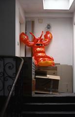 Mr.Lobby On Pause (foddokross) Tags: munich homeless stairway cardboard inflatable lobster boxes hummer treppenhaus kompost kompostierung aufblas