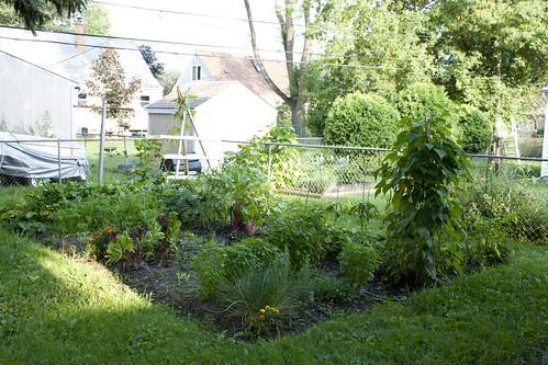 2010 Garden: Week 10