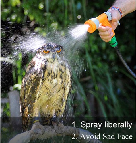 howtocleanowl