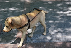 Dog (thoth1618) Tags: nyc newyorkcity sculpture dog ny newyork brooklyn 2010 brooklynny metrotechcenter brooklynusa august2010 august72010