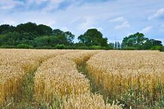 Crops (samtrav) Tags: flower detail building up landscape fly nikon close fields editing d90