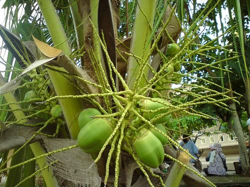 2010-07-26 泰國普吉島拜拜 DSC01033