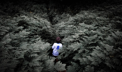 swallowed by the ferns