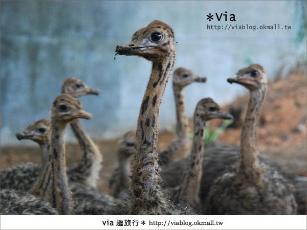 【新竹住宿】來去和動物住一晚~關西六福莊生態渡假旅館22