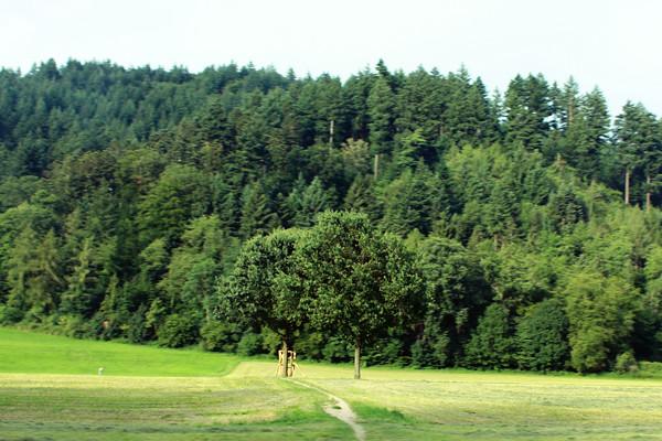 einbaum