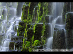 Proxy Up Close (pdxsafariguy) Tags: green oregon waterfall moss falls threesisters wilderness proxy deschutesnationalforest tomschwabel