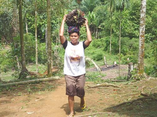 Bukit Lawang - Région (11)