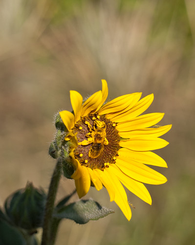 Pollinator II