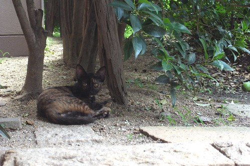 Today's Cat@2010-08-15