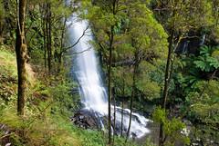 Great Ocean Road 53 (Scott Weatherson) Tags: trees nature water forest waterfall australia victoria greatoceanroad lorne surfcoast erskinefalls