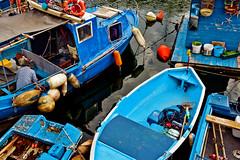 Preparation and discovery (_Massimo_) Tags: massimostrazzeri ziomamo genova genoa liguria italy boat barca blue blu darsena ghesemmu