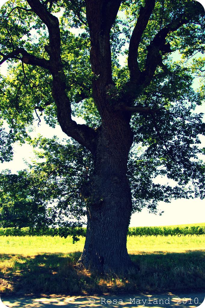 Tree 1.2 bis
