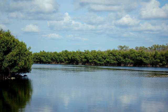 Salt Water Marsh