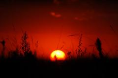 Cu colorado (Eduardo Amorim) Tags: sunset brazil sun sol southamerica field brasil atardecer soleil tramonto sonnenuntergang prdosol campo pelotas sole sonne riograndedosul poniente champ anoitecer coucherdesoleil brsil entardecer crepsculo amricadosul poente amriquedusud sudamrica suramrica amricadelsur sdamerika costadoce americadelsud americameridionale auffangen eduardoamorim iayayam yamaiay iwalymseamtlasmfab
