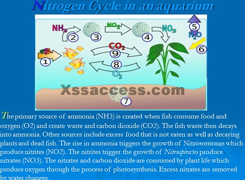 nitrogen cycle presentation