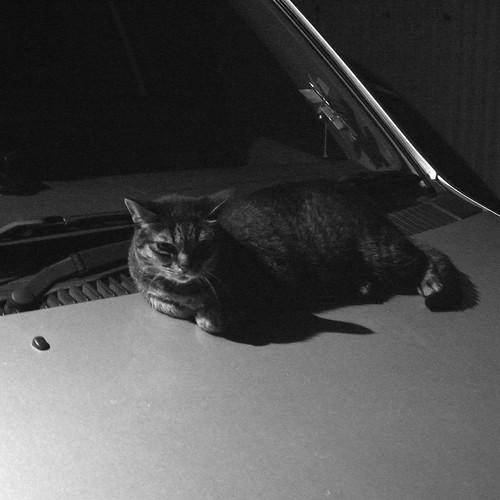 Today's Cat@2010-08-21