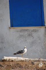 foto grecia skiathos isola deserta uccello