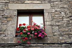 Ainsa -  En flors (Ramon Oromí Farré @sobreelterreny) Tags: flores huesca ventanas ainsa osca cristales sobrarbe flors columnas aragón vidres finestres columnes tiestos aragó testos torretes lainsa dinteles llindes calbenido