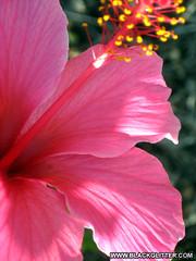 A Flower [Aug 27, 2010]