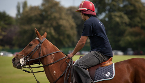 ireland horse dublin sport pony polo phoenixpark poloponies streetsofdublin infomatique photographedbywilliammurphy 28082010 allirelandpoloclub