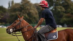 Polo Ponies - Phoenix Park - by infomatique