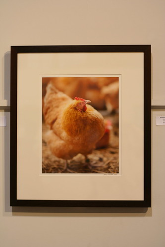 Fine Art Chicken
