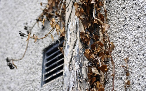 Drain Pipe, Leaves and Vent