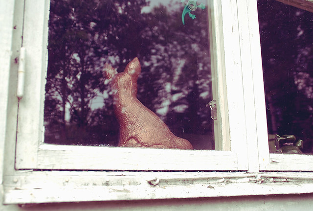 window deer
