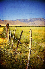 Wouldn't hold me back... (Maureen Bond) Tags: ca wood flowers blue summer sky mountains green texture film field grass yellow 35mm fence sticks wire chain reallyhot barbed blackbirdfly maureenbond fencefriday