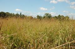 "Prairie Area <a style=""margin-left:10px; font-size:0.8em;"" href=""http://www.flickr.com/photos/91915217@N00/4994643917/"" target=""_blank"">@flickr</a>"