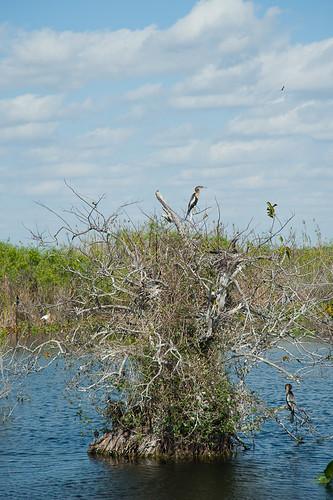 Everglades-21