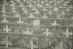 02835 (Myrkwood666) Tags: brussels bw monochrome cemetery grave graveyard blackwhite war cross belgium belgique belgie zwartwit graf rip bruxelles krieg kreuz sw grab schwarzweiss brussel schaarbeek schaerbeek belgien oorlog kruis kerkhof ehrenfriedhof erschossen fusill gefusilleerd seelenwinter mrkskygge onlydeathisreal myrkwood666