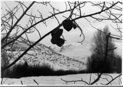 SV - Film (olympusjack) Tags: vacation bw sun white snow black ski tree film leaves weather grey skiing idaho valley