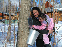 Exploring Maple Tapping