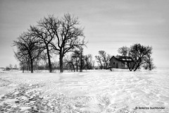Winter (/ shadows and light) Tags: trees bw house snow ice monochrome rural countryside grain cottage manitoba prairie tamron2875mmf28