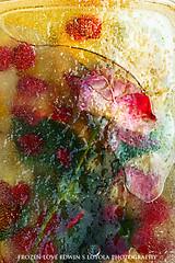 frozenLove032a (Edwin Loyola) Tags: flowers love ice rose frozen abstraction edwinloyola frozenlove