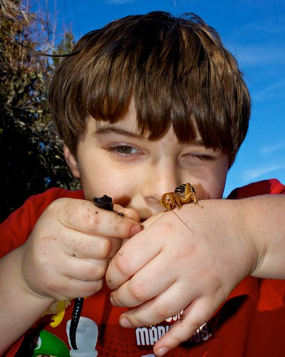Roger with Salamander & Jerusalem Cricket