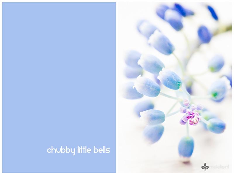 Chubby littel bells