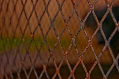 Fire Basket (renzoinmilford) Tags: lines metal diamonds fire wire rust basket burnt converginglines