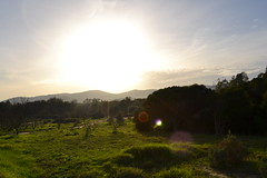 Sunset, no added lens flare (Every kind of light -) Tags: blue winter sunset sky mountains tree green grass clouds lens countryside spain glare bright january flare blazing 2011 winterwalks coldsunnydays