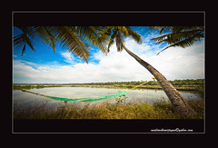 God's own country (sachinvijayan) Tags: life trees ireland plants sachin india green nature water clouds landscape fly coconut places visit kerala tourist enjoy tallaght godsowncountry perfectvacation reddotstudio reddotstudios