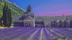 A year later (Luc1659) Tags: lavanda ricordi profumo francia abbazia provenza lavender violet silenzio landscape elaboration campo colors