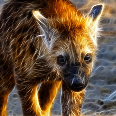 Spotted hyena (J-C-M) Tags: spotted hyena botswana wildlife animal fractalius
