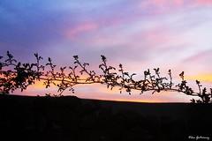 La belleza de las espinas (VAD) (Vika Scrivener) Tags: espinas atardecer ocaso puesta de sol montaña sombra nubes colores